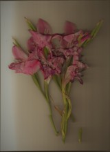 flowers#2