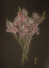 flowers#3